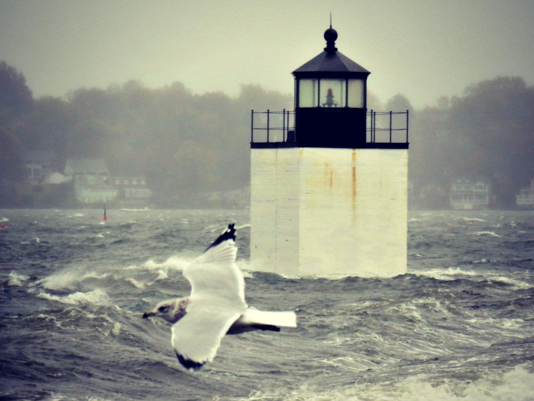 Gull in the Hurricane